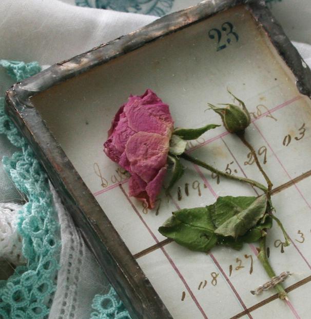 Tiny rose shadowboxa