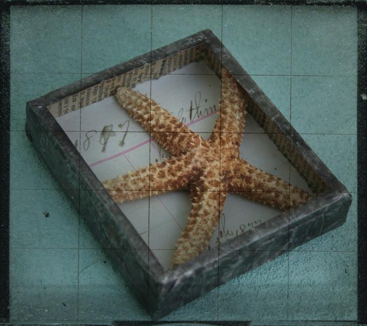 Starfish Reliquary