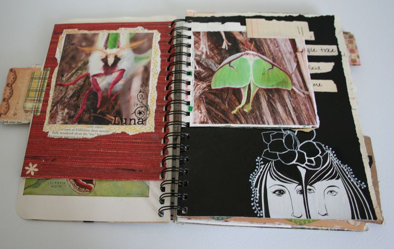 Flotsam and jetsam journal spring (3)