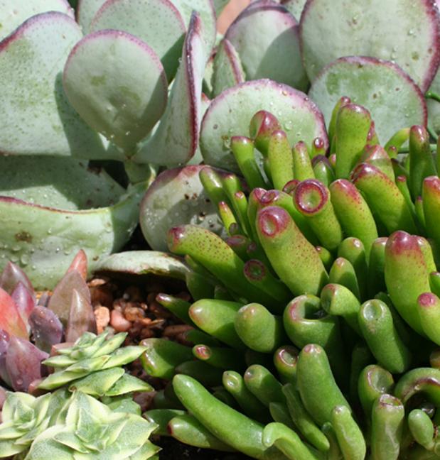 Succulent pot w