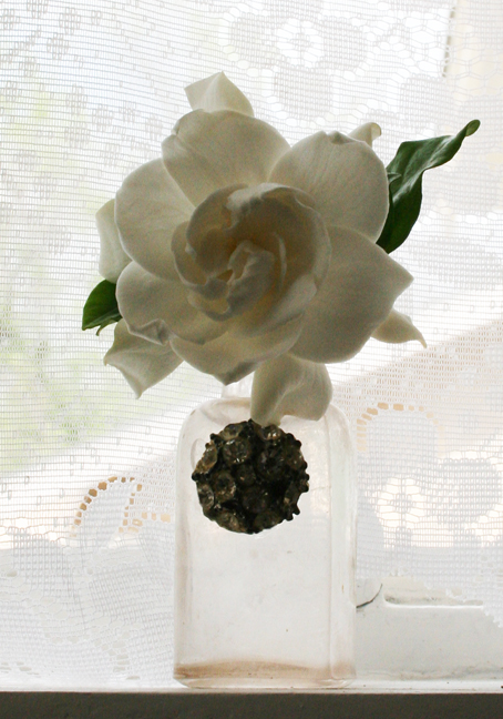 Last gardenia