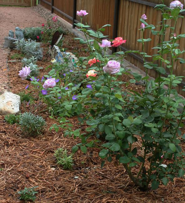 Bunny rose garden