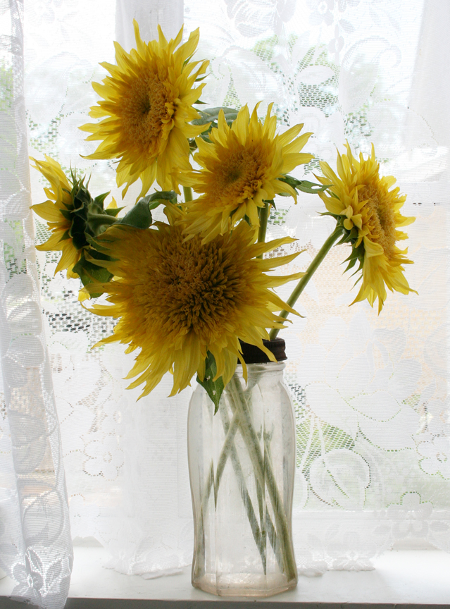Sunflowers in an old peanut butter jar