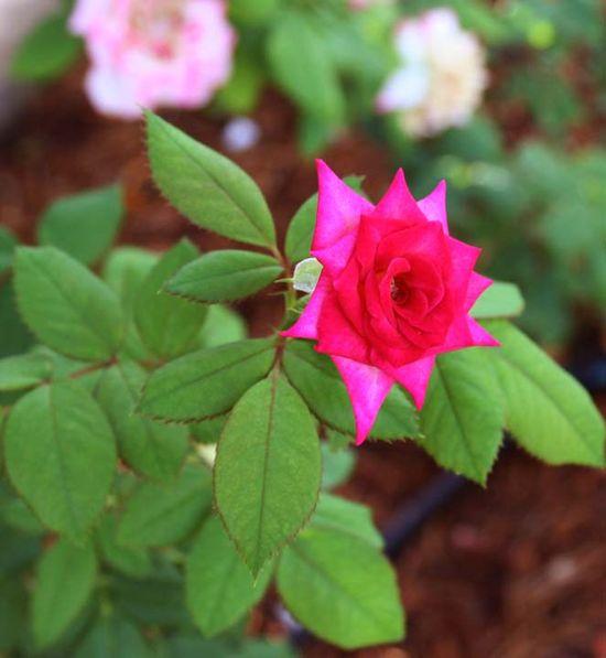 Secret garden a 014
