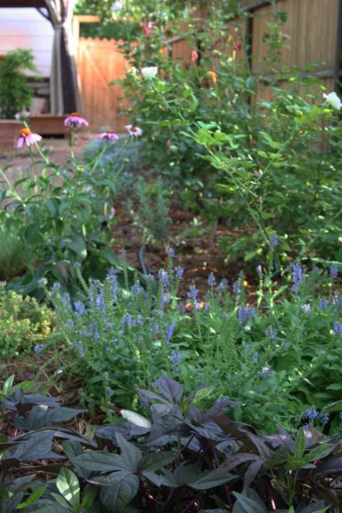 Secret garden a 009
