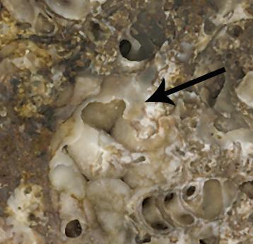 Fossil rock heart