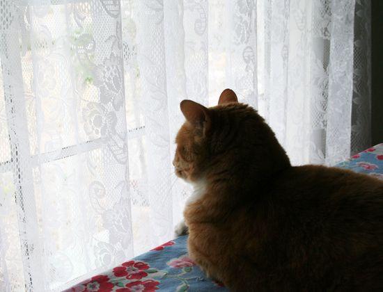 Max bird watching