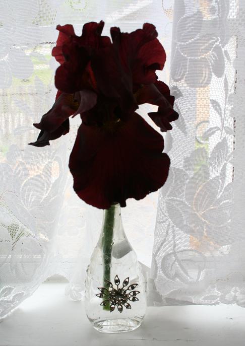 Red iris