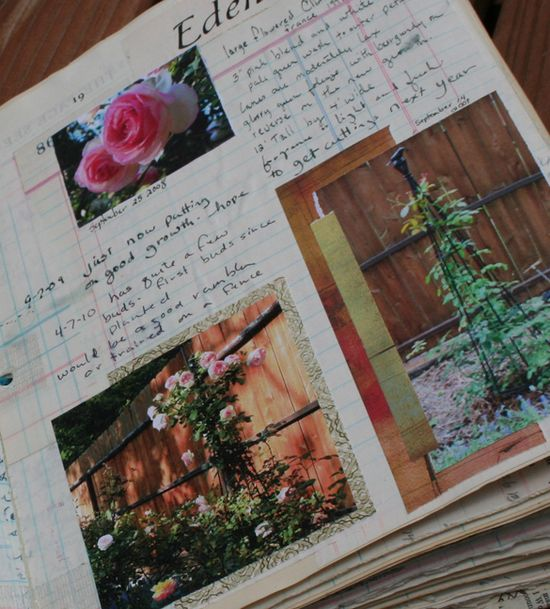 Rose journal b
