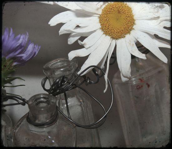 Daisy bottle garland