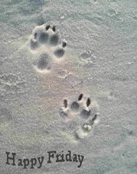 Dog sand prints