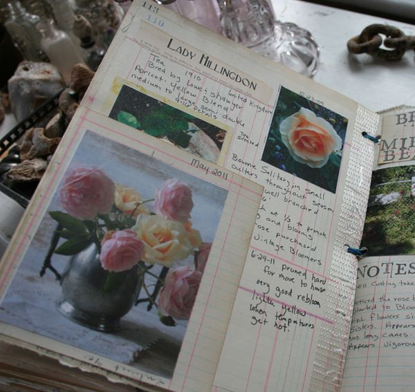Rose garden journal notebook a