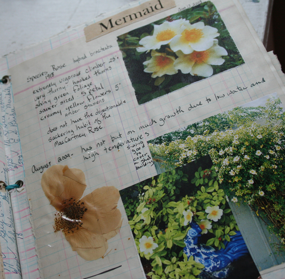 Rose garden journal notebook mermaid