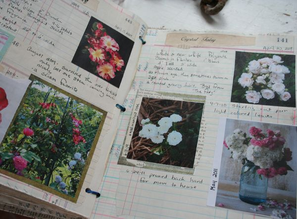 Rose garden notebook journal b