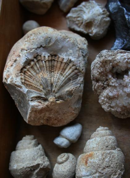 Fossil b