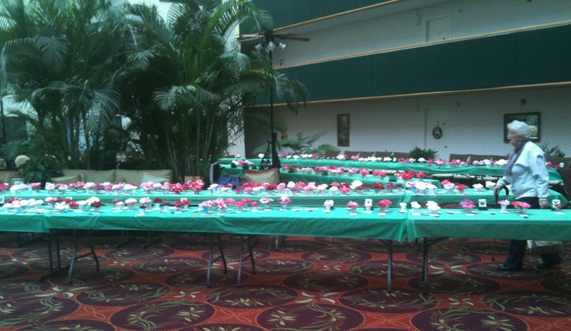 Camilla table