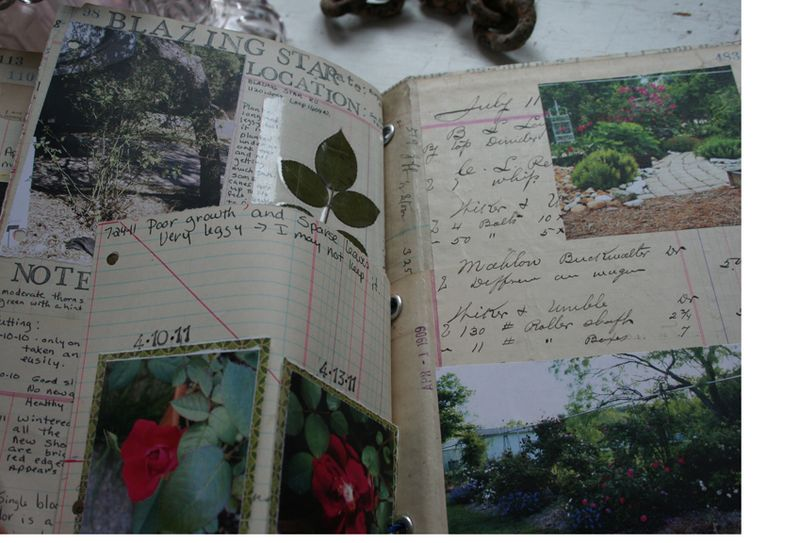 Rose garden journal notebook