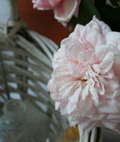 9-21 roses b
