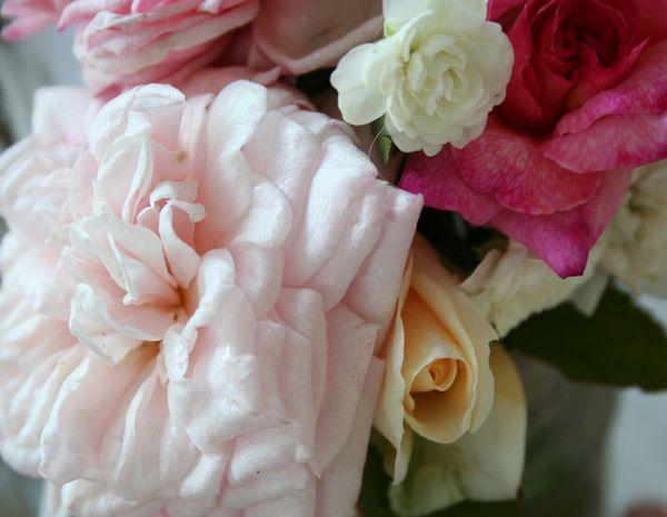 9-21 roses