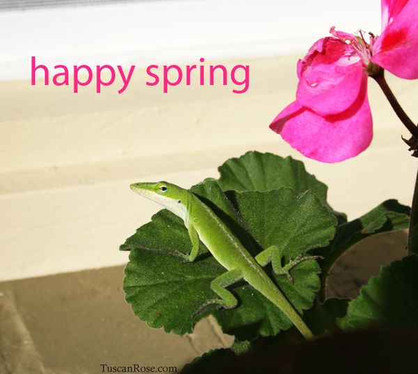 Happy spring anole lizard