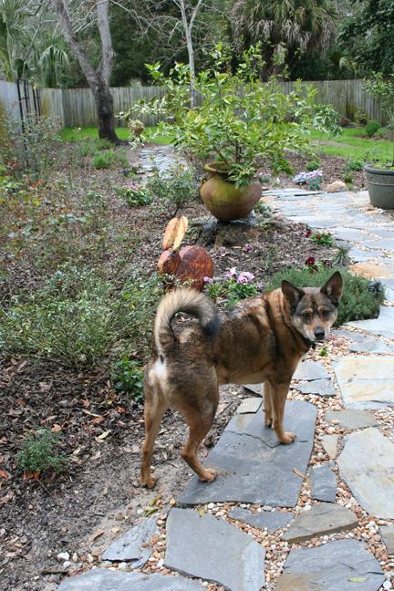 Ralph the dog on flagstone path