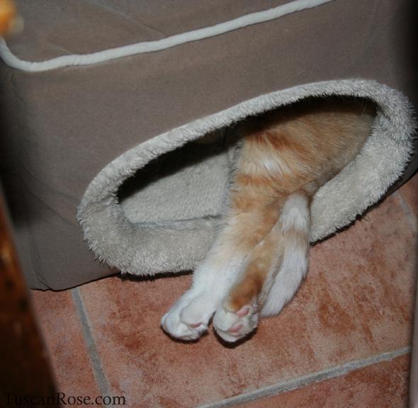 Orange kitty toes