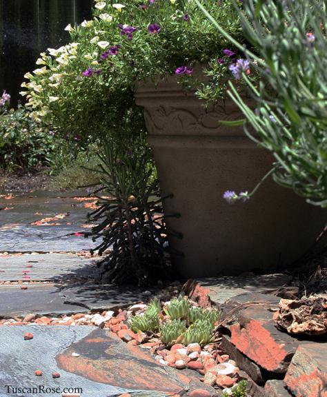 Succulents under flower pot