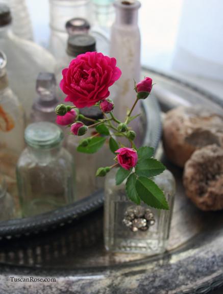 Bradley street found rose