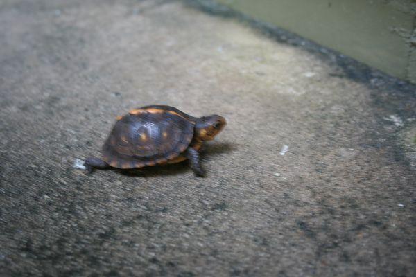 Wrong way turtle