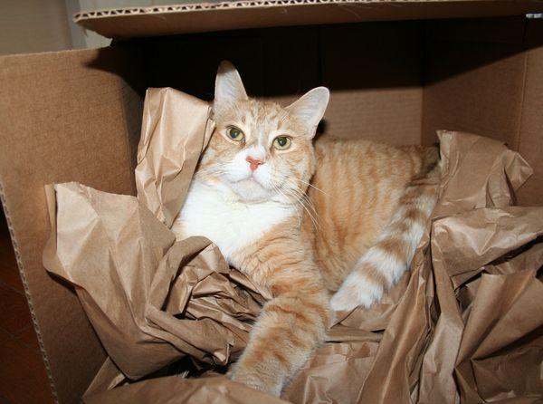 Max in a box