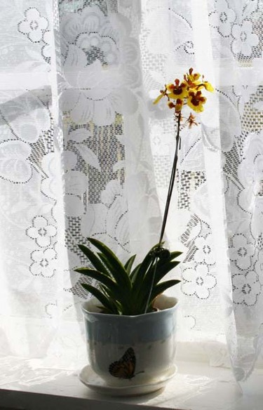 Window_orchids_1_2