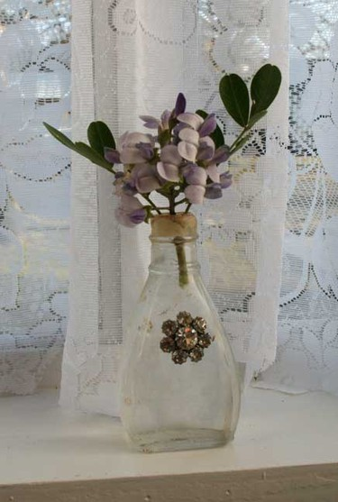 Texas_mountain_laurel_and_lace